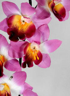 Silk Orchids  Pink Yellow  Cymbidium