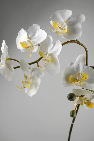 Silk Orchids White Chiffon Phaleanopsis 36in