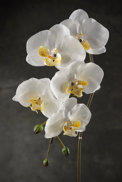 White Phaleanopsis Artificial Orchid Flowers