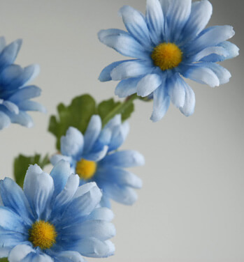Tiny  Blue Silk Daisies (12 stems)