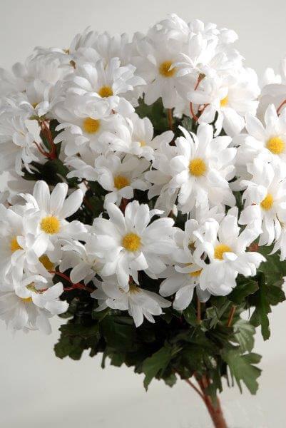 Silk Daisies White (72  flowers)