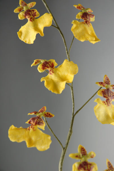 Yellow Orchids 27in Silk Oncidium Flowers