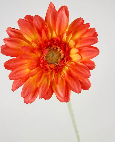 24 Orange Silk Gerbera Daisies