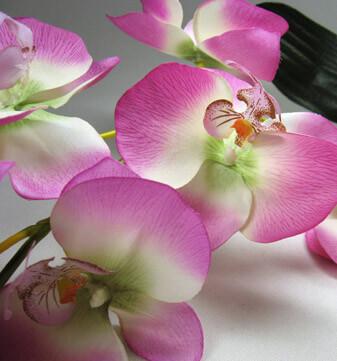 Orchids Lavender & White  Dendrobiums