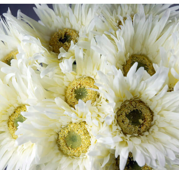 Gerbera Daisies White Silk (12 flowers)