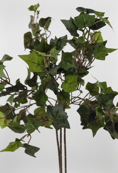 English Ivy Stems 18in (24 stems)