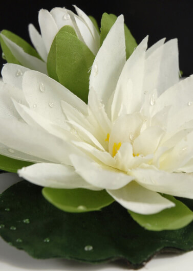 12 Floating White Water Lily Flowers    4 Inch