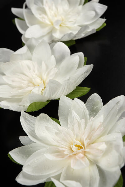 Floating Flowers Large 7in  White Lotus Flower (pack of 12)