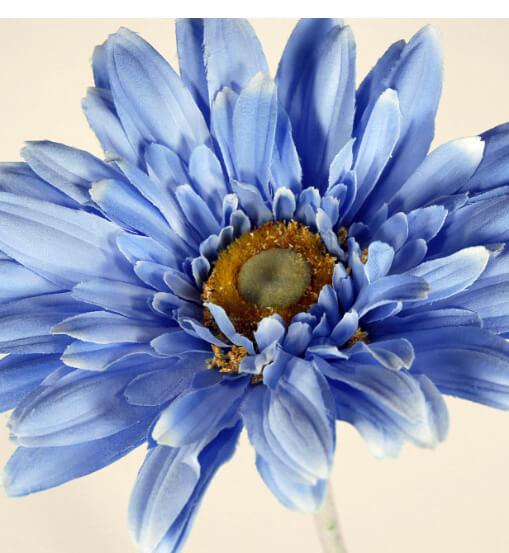 Gerbera Daisies Sephora Blue Silk  (24 flowers)