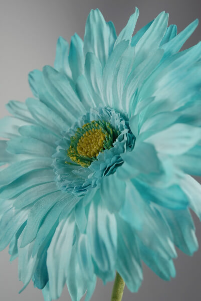 Silk Gerbera Daisy Tiffany Blue