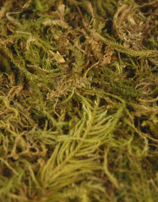 Dried Moss Green