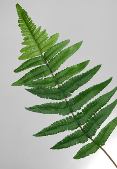 Leather  Fern Leaves Silk 12 in  (144 leaves)