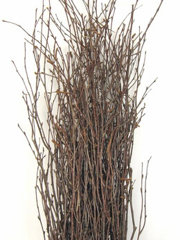 "Natural Birch Branches (25 branches) 36-48"" tall"