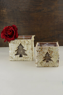 Birch Pot Square 5in (Set of 2)