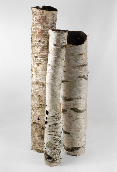 Natural Birch Bark Tubes 37-48