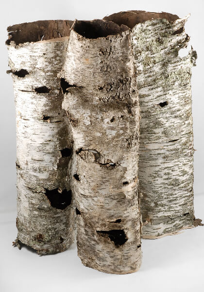 Natural Birch Bark Tubes 31-36