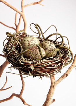 Bird Nest with Eggs 4.5in