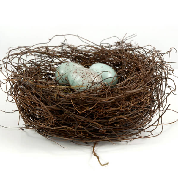 Bird Nests Natural Angel Vine with 3 blue eggs