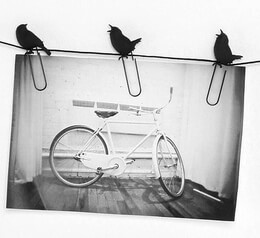 Photo Clip Birds