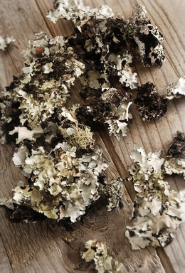 Lichen Moss Black 2oz