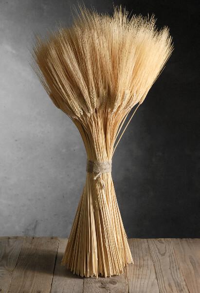 Wheat Triticum Stack 20in