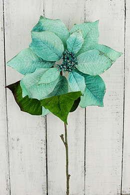 Aqua Blue Poinsettia 29in