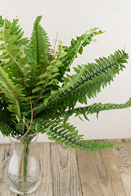 Artificial Boston Fern Bush 18in