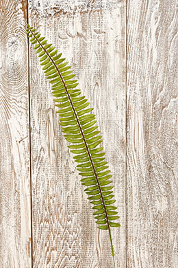 36 Artificial Boston Fern Sprays 23.5in