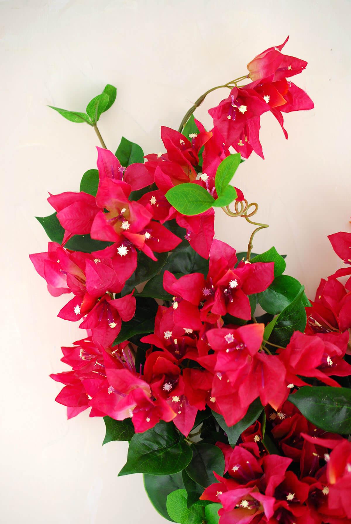 Bougainvillea Bush Red 25in