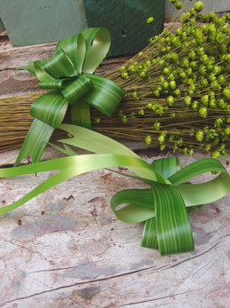 Variegated Aspidistra Leaf Pull Bows (12 bows)