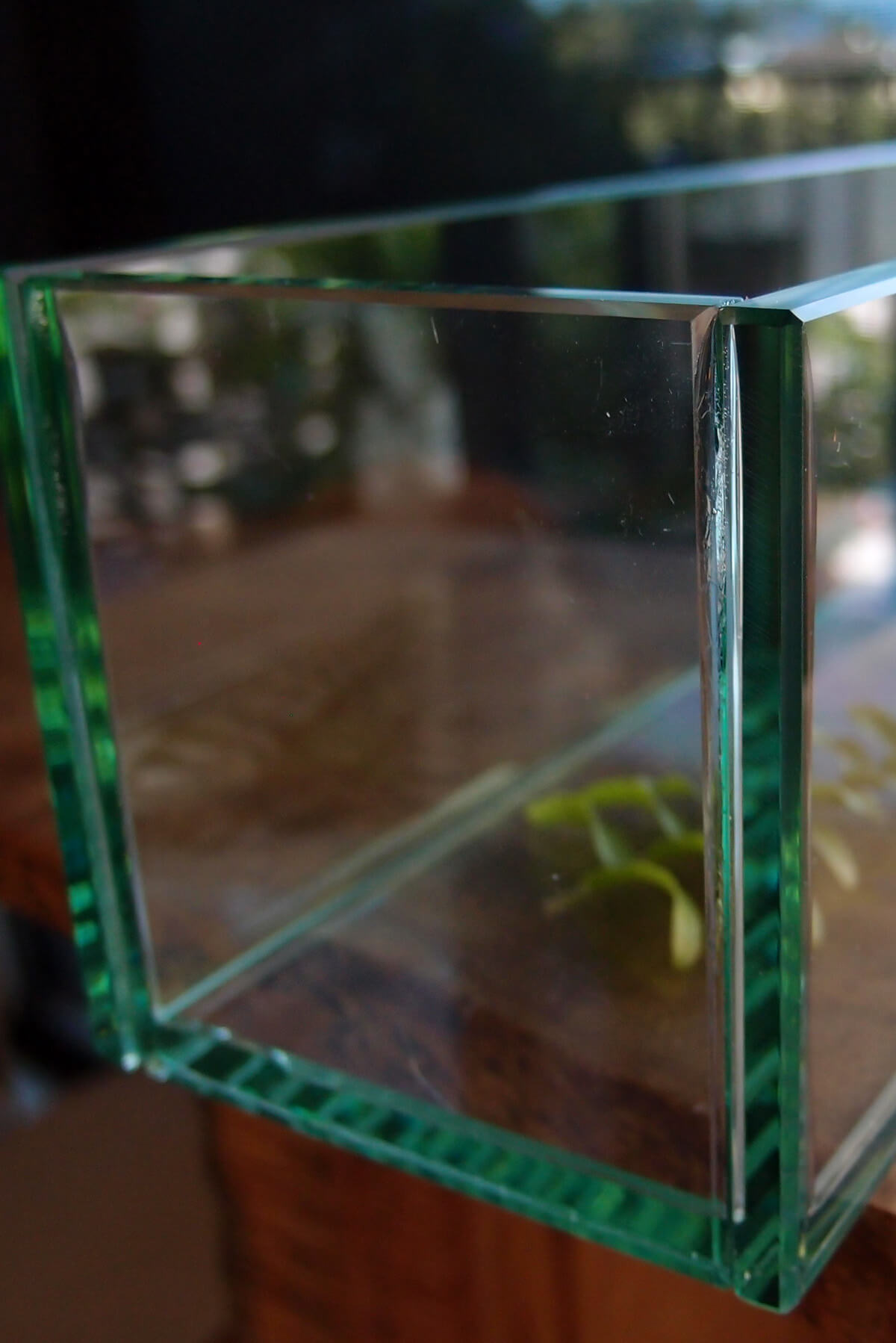 "Thick Glass Plate Planter 12""x4""x4"""