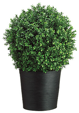 Boxwood Ball in Bamboo Container