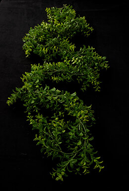 Japanese Boxwood Garland Green 6ft