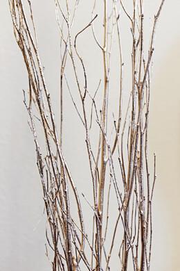 5 Gold Leaf Birch Branches Birch 5 Feet