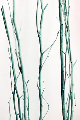 5 Seafoam Green Birch Branches Birch