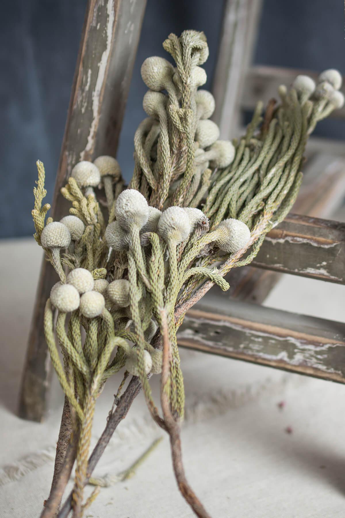 Natural Brunia Berries Silver  4 oz Bunch