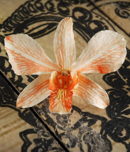 30 Butterfly Orange Preserved Orchid Flowers