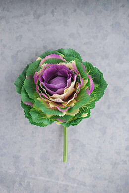 Cabbage Pick Purple 5in