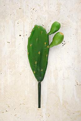 Cactus Stem Small