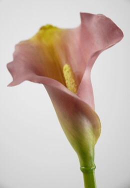 Calla Lilies Light Pink & Yellow Natural Touch
