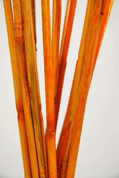 Cane Sticks Orange 40in (Pack of 20-25)