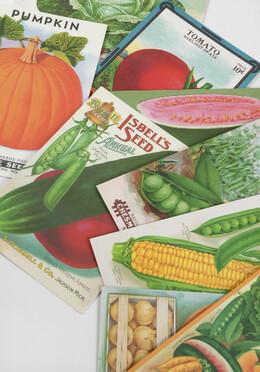 Cavallini Farmer's Market Postcards - 18 cards