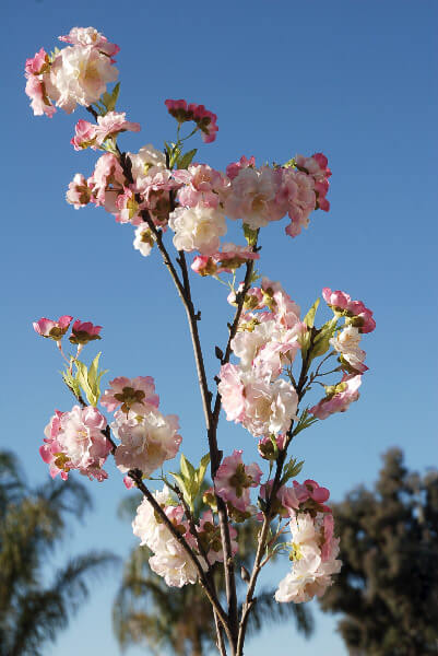 Pink cherry blossom branches 45 quot