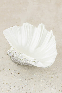 Clam Shell Bowl 9in