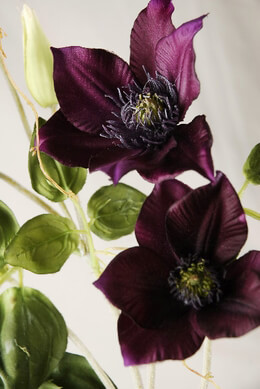 "Clematis Wine Flowers 24"" tall"