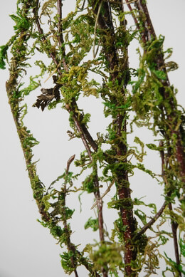 Moss Covered Natural Branches 5ft | 3-4 branches