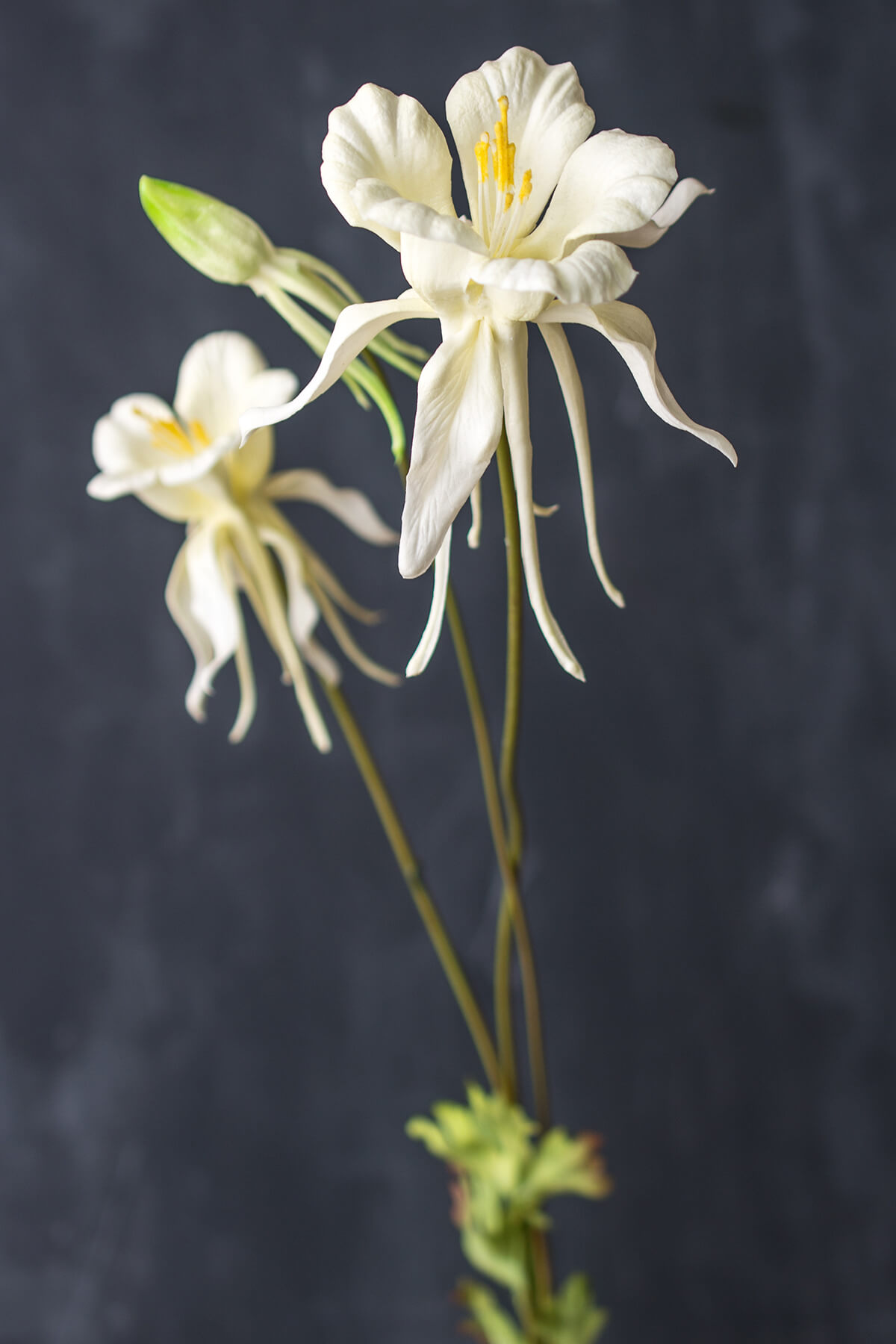 White Columbine Flowers Natural Touch 35""