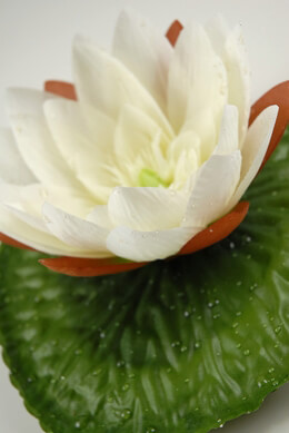 "Cream 7-1/2"" Silk Water Lily with water drops"