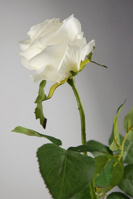 Cream White Long Stem Silk Roses 27""