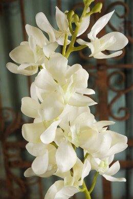 Silk Orchids Cream 31in
